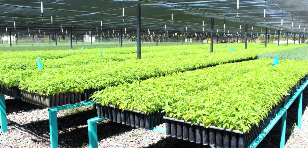 Vivero forestal militar de la paz produce 500 mil plantas for Proyecto productivo de vivero forestal